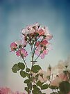 Roses in the Sky by Elaine Teague