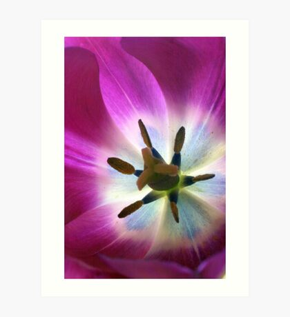 that Tulip Glow Art Print