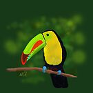 Keel-Billed Toucan by Ray Cassel
