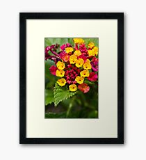 Red and Yellow Tiny Flowers Framed Print