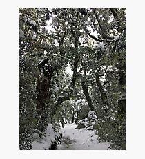 Narnia Photographic Print
