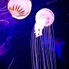 Jelly Fish  by Hena Tayeb