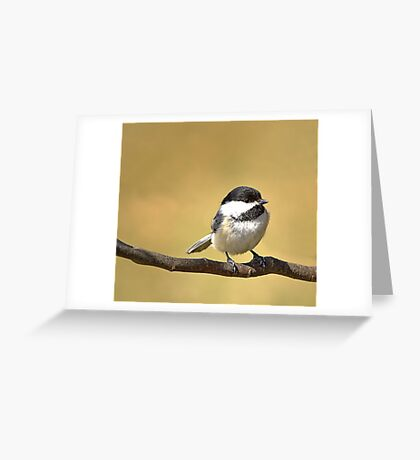 Black-capped Chickadee Greeting Card