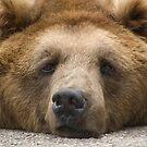 Like a bear with a sore head... by AJM Photography