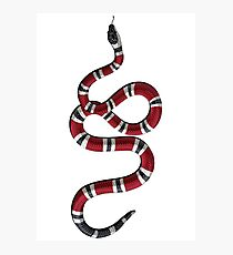Vertical Snake Photographic Print