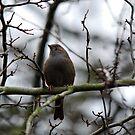 Unknown Bird by dougie1
