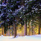 Winter Glow !-Rawdon by Elfriede Fulda