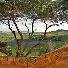 Tree at Saqqajja Steps, Malta by Rosalie M