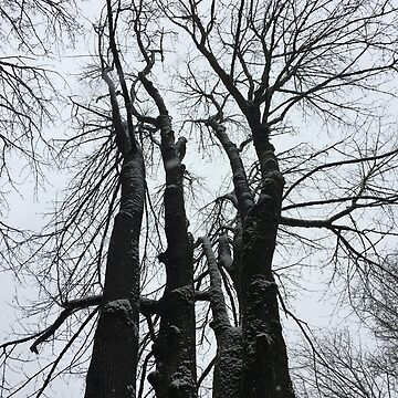 Winter Trees by cathiejoyyoung