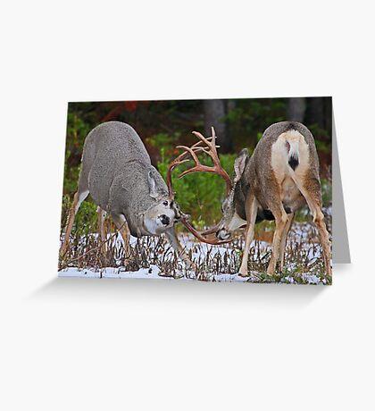 Mule Deer Buck Fight 4 Greeting Card