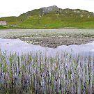 Schilf und Seerosen - Hebridean Lake von BlueMoonRose