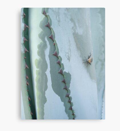 Century Plant and Stinkbug Metal Print