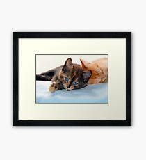 Kittens Framed Print