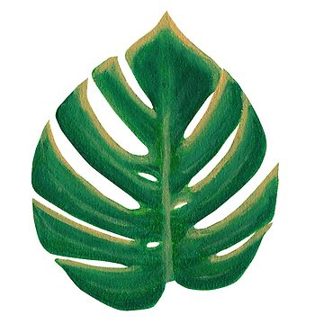 Split Leaf Philodendron Monstera Deliciosa Painting by reujken