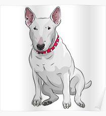 white Bull Terrier Poster