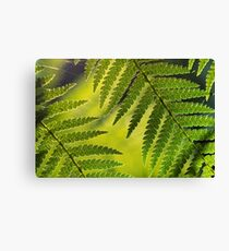 Sunlit fern II Canvas Print