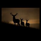 Red Deer at dawn by Andy Beattie