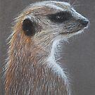 Meerkat by Kate Wilkey