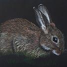 Wild Rabbit by Kate Wilkey