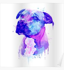 Pit bull Watercolor, Pit bull Painting, Pit bull Portrait, Pit bull art, Pit bull illustration Poster