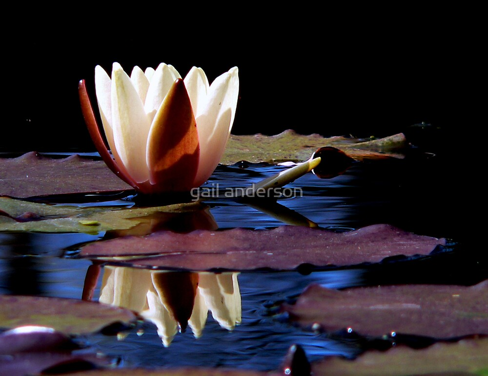 Lily by gail anderson