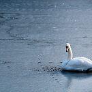 Swan on Iced Lake by Jakov Cordina