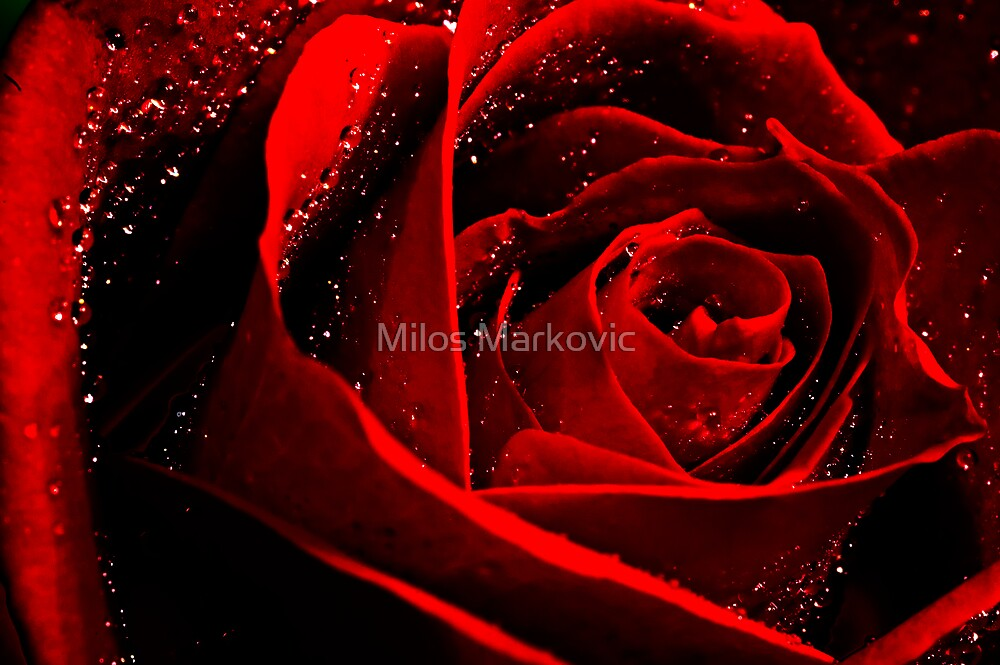 In the Name of Love by Milos Markovic