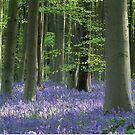 Wiltshire Bluebells by MissElaineous Designs