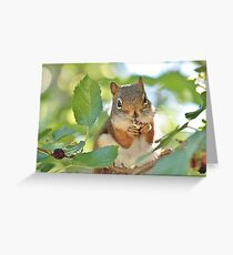 Munchin' on mulberries Greeting Card