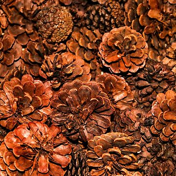Pine Cones by quackersnaps