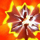 My Tulips 2 by dougie1