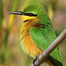 Little Bee-eater by Anthony Goldman