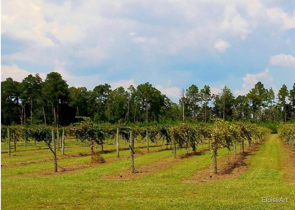 Vineyard by EloiseArt
