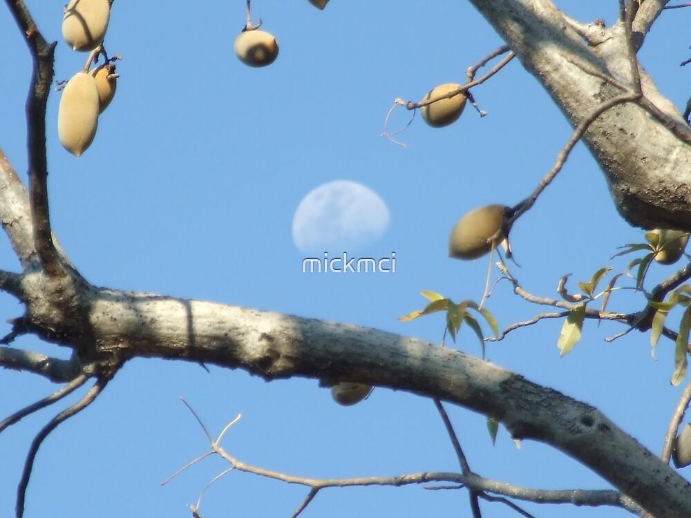 Moony Boab by mickmci