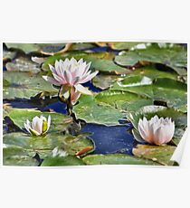 WATERLILY AND PADS Poster