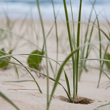 Emerald Beach, sand dunes by Normf