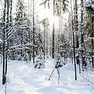 Snow and sun in the forest. by GermanS