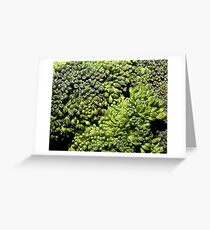 Broccoli Macro Greeting Card
