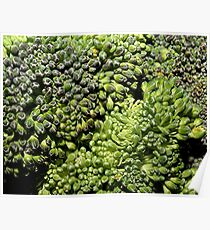 Broccoli Macro Poster