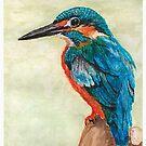 Kingfisher by Kate Wilkey