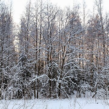 Snow on the bare branches. by GermanS