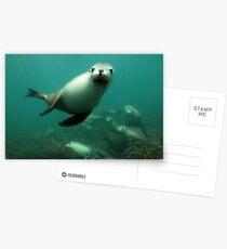 Australian Sealion Postcards
