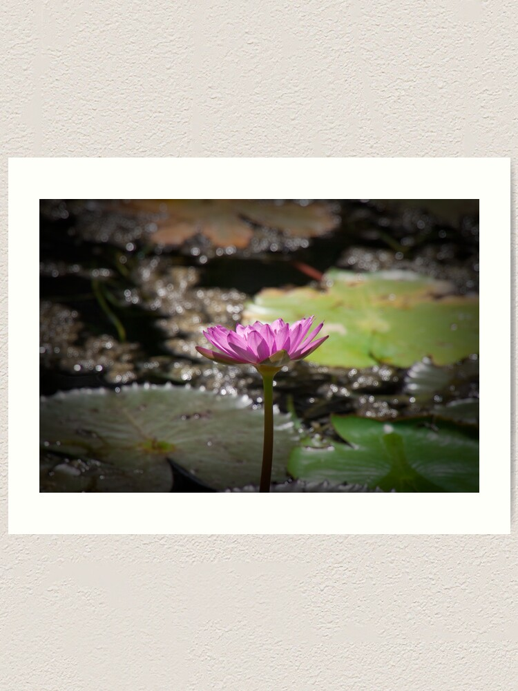 Alternate view of Water Lilly Art Print