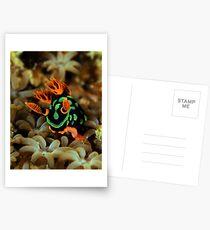 Nembrotha Nudibranch Postcards