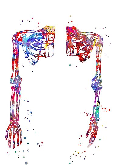 Arms, arms anatomy, arms art, anatomy, watercolor arms, shoulder ...