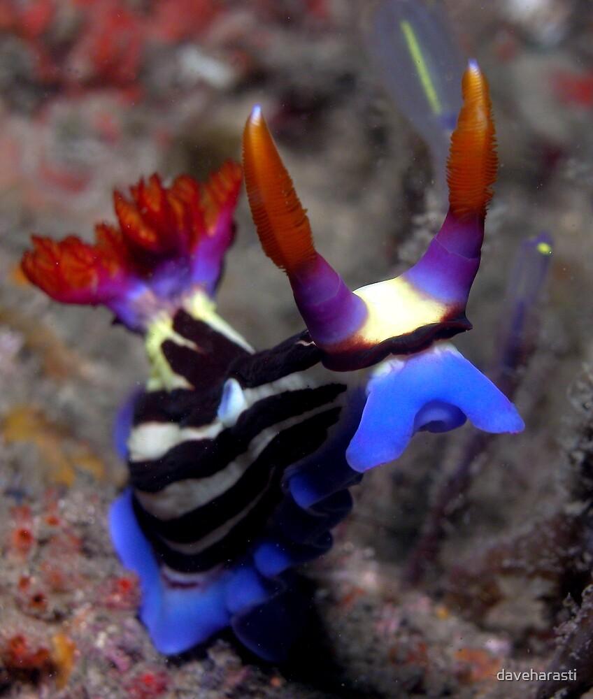 Devil Nembrotha Nudibranch by daveharasti
