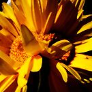 Gerbera Like a Painting by DottieDees