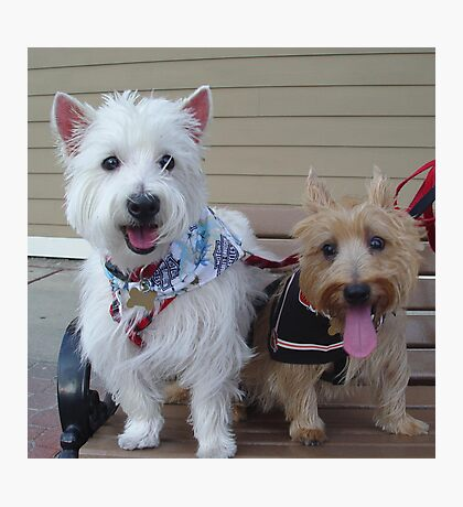 Westie and Cairn Photographic Print