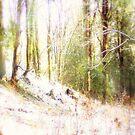 Snowy Sunlit Forest Glade #2 by Dawna Morton