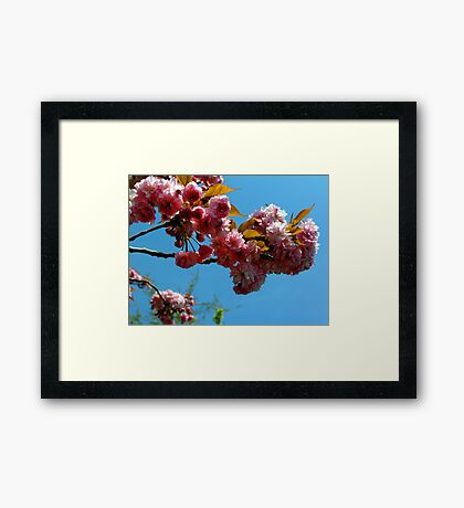 Ornamental Cherry Blossoms Framed Print